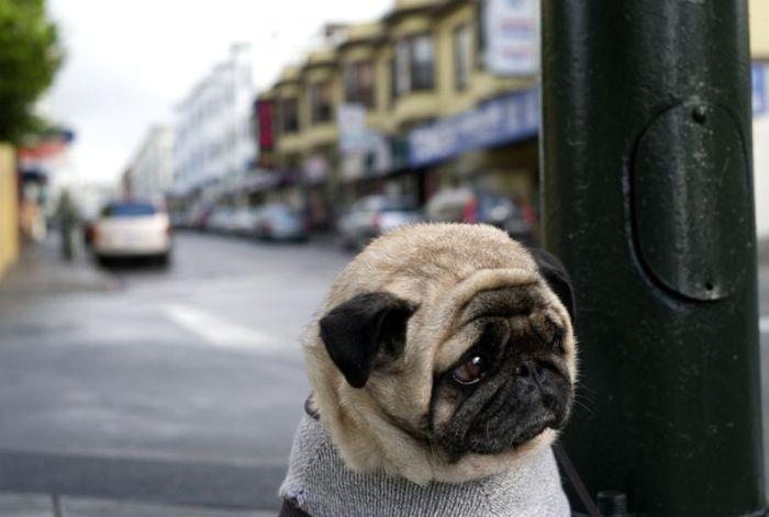 http://de.acidcow.com/pics/20090925/saddest_dog_01.jpg