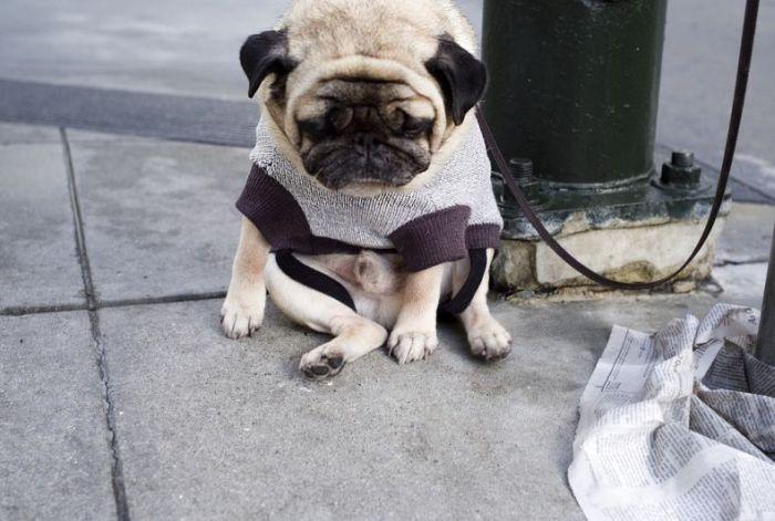 http://de.acidcow.com/pics/20090925/saddest_dog_03.jpg