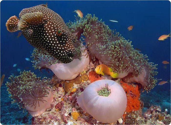 Fotografias del fondo del mar muy lindas taringa - Fotos fondo del mar ...