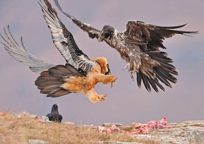 Depredador vs presa