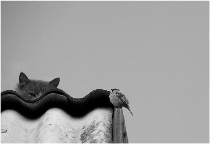おいしそうな脚の女子校生 256脚目猫ガイジ隔離スレ [無断転載禁止]©bbspink.comYouTube動画>2本 ->画像>2970枚
