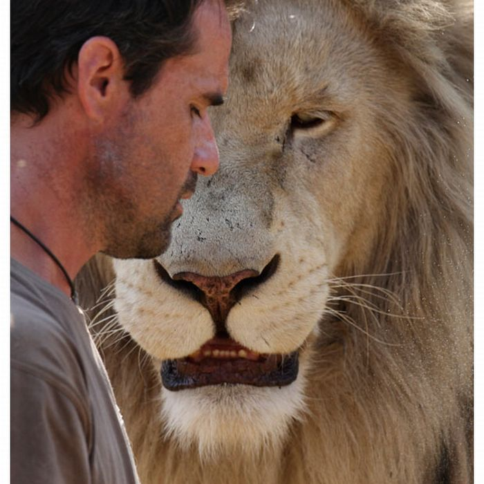 Kevin Richardson with lions