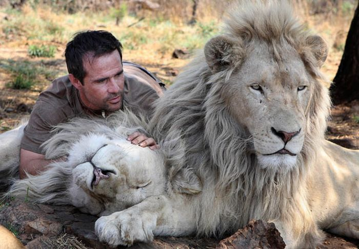 lions with kevin richardson