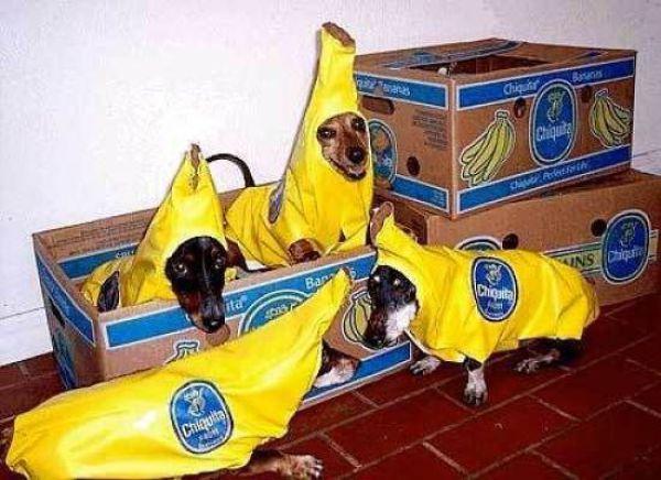 Funny Dog In Banana Costume