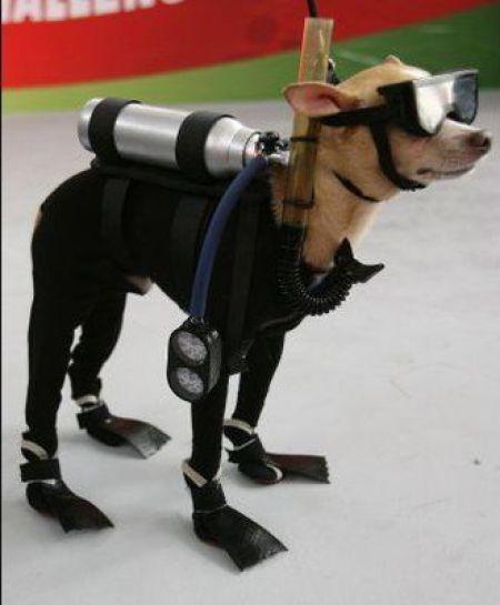 Dog In Funny Swim Costume