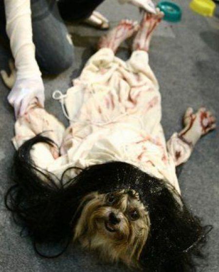 Dog In Horror Costume