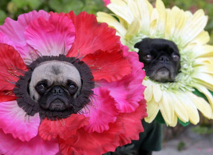 Dog In Flower Costume