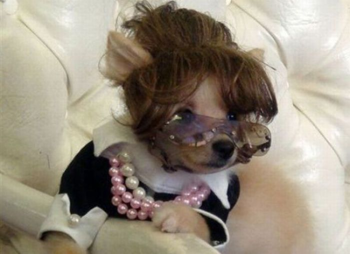 Dog looks cute in Costume