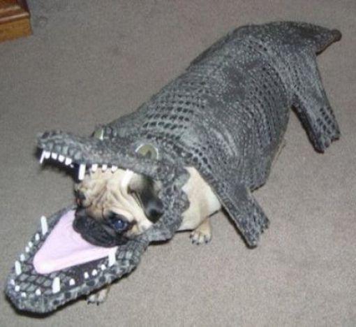 Dog In Crocodile Costume