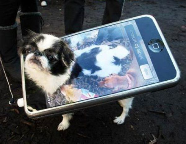 Dog In Mobile Costume