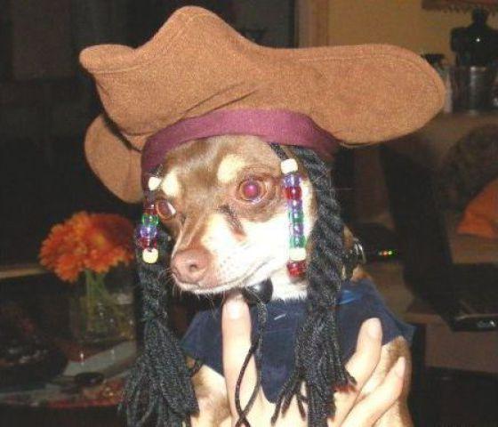 Funny Dog In Hat
