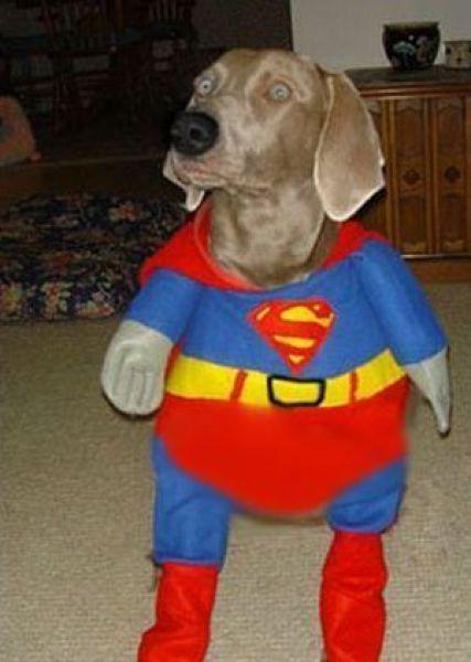 Dog In superman Costume