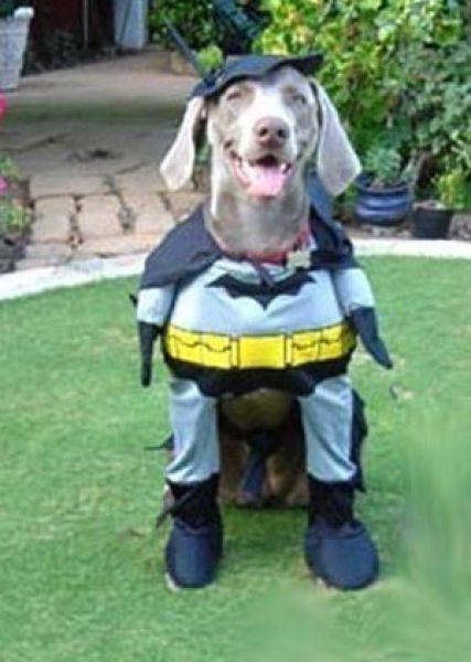 Dog In Badman Costume