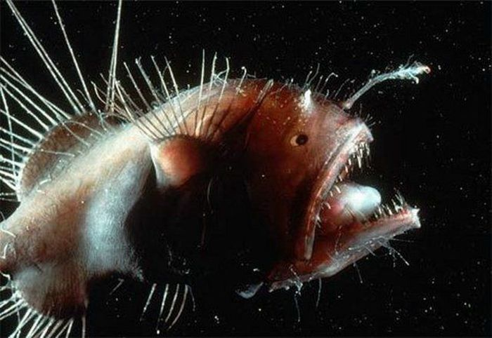 http://de.acidcow.com/pics/20101221/ugliest_and_scariest_fishes_05.jpg