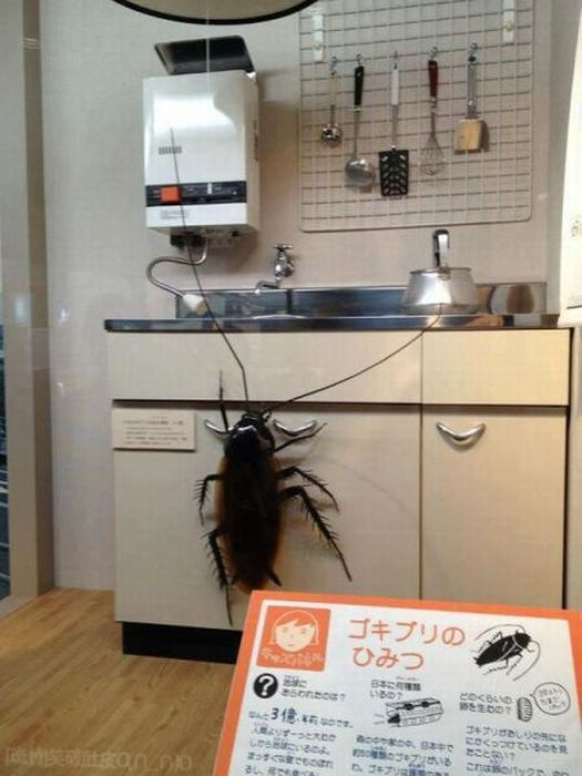 exceptional Cockroach Problem In Kitchen #5: Cockroaches In Your Kitchen South Shields Sanddancers Forum